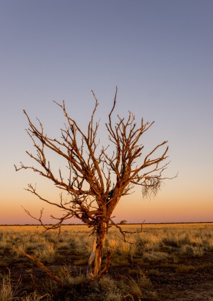 longreach-lonely-tree-sunset
