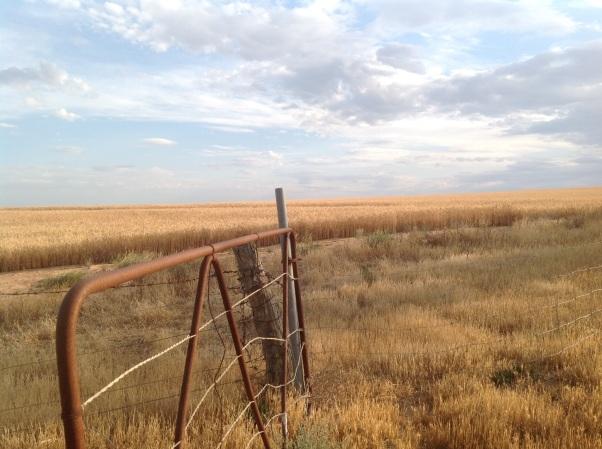 Grain fields near Lascelles, Victoria. Photo Erle Levey