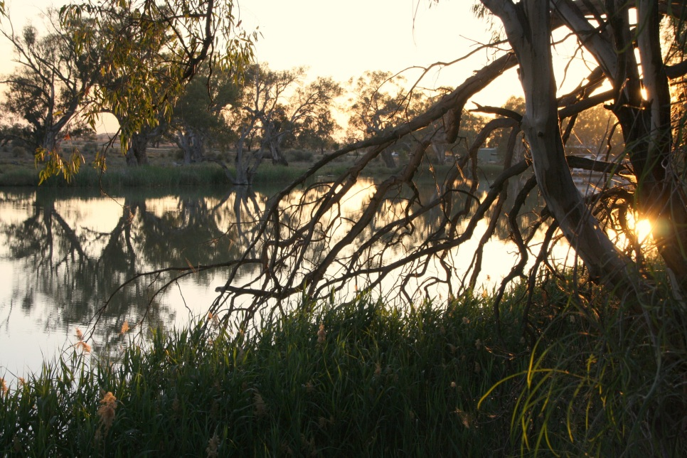 Morning light on the Darling River, Wentworth, NSW. Photo: Erle Levey