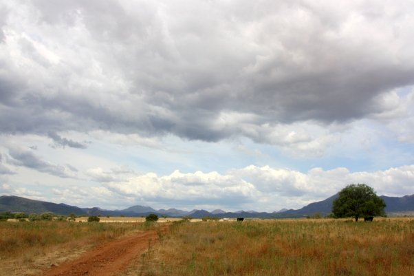 The Warrumbungle Ranges from near Tooraweenah, New South Wales Photo: Erle Levey