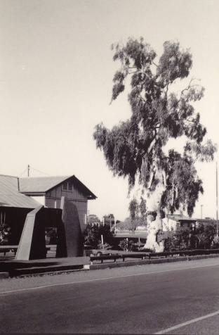 The Tree of Knowledge in 1989 outside the Barcaldine railway station. John Oxley Library, State Library of Queensland.