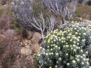 mt wellington-58