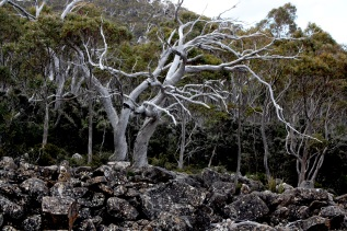 mt wellington_2318