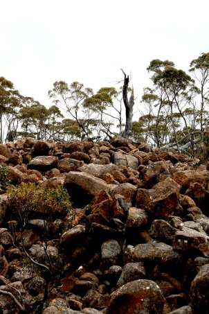 mt wellington_2322