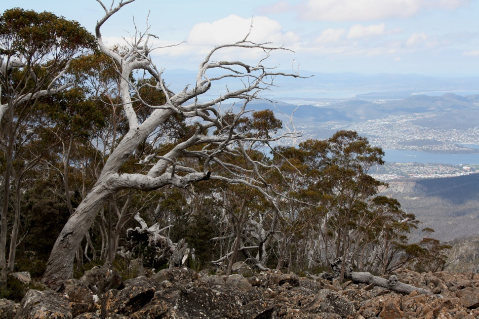 mt wellington_2323