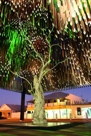 The Tree of Knowledge, Barcaldine. Photo: Erle Levey, Sunshine Coast Newspapers