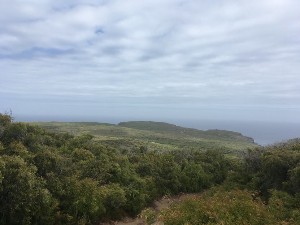WEST CAPE HOWE_9215