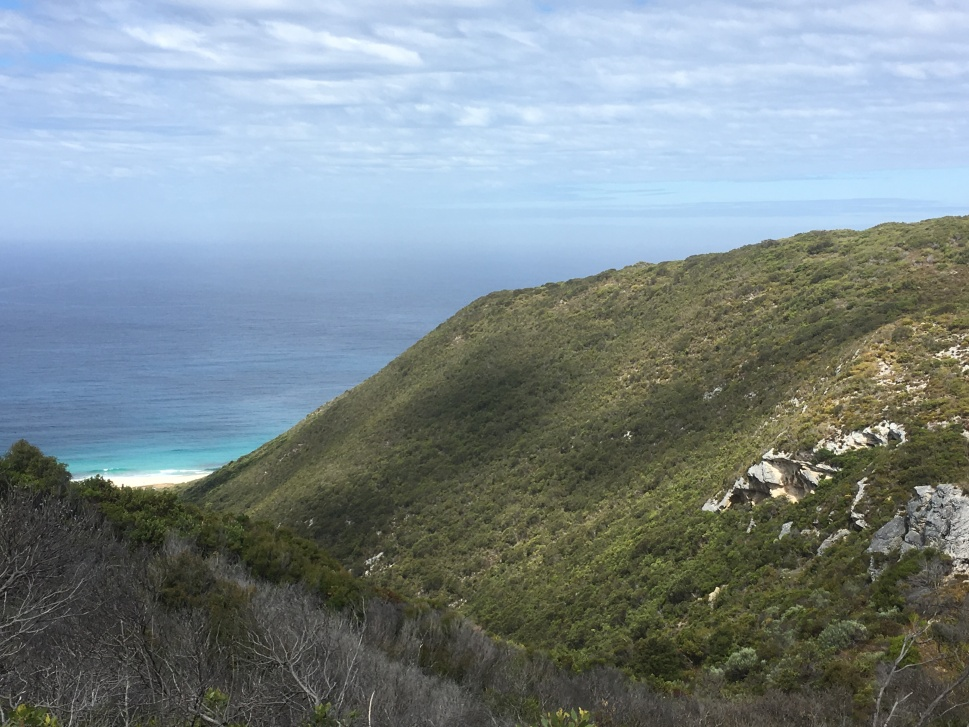 WEST CAPE HOWE_9237