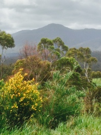 huon valley-130
