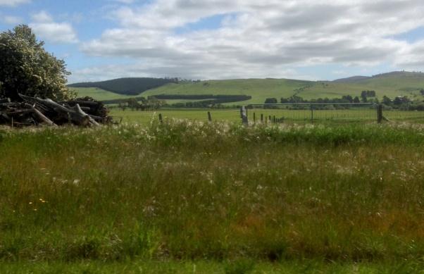 Tasmania_1159