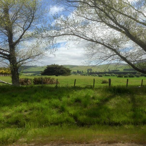 Tasmania_1160