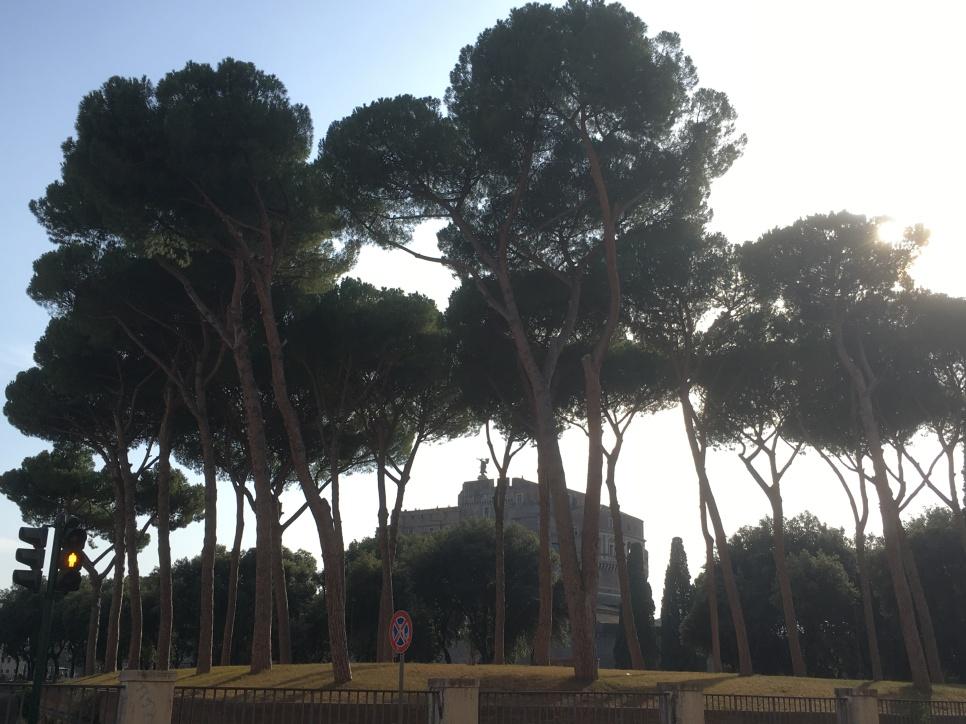ROME_7659