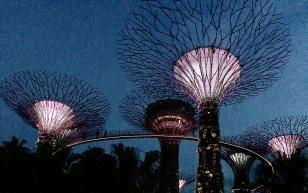 SINGAPORE_8491